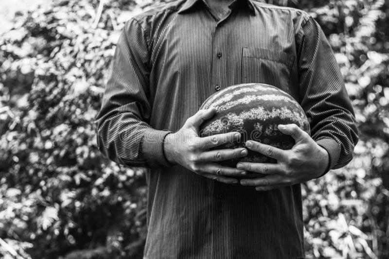 Ένα άτομο που κρατά ένα μεγάλο ώριμο καρπούζι στοκ εικόνα