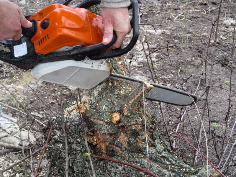 Ένα άτομο πριονίζει μια σύνδεση το έδαφος με ένα αλυσιδοπρίονο στοκ εικόνα με δικαίωμα ελεύθερης χρήσης