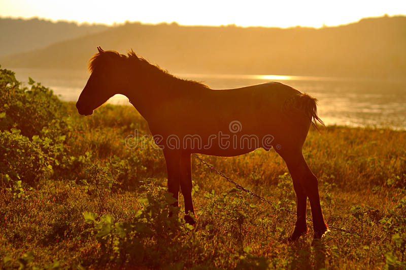 Ένα άλογο στο ηλιοβασίλεμα στοκ φωτογραφία με δικαίωμα ελεύθερης χρήσης