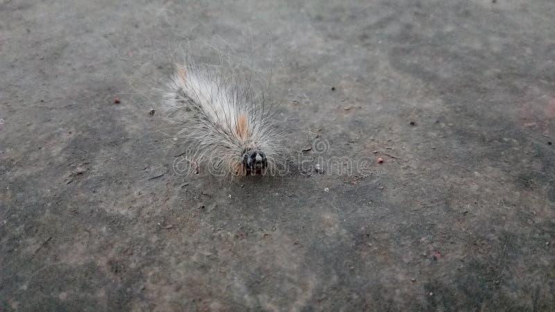 Ένα έντομο στοκ φωτογραφίες με δικαίωμα ελεύθερης χρήσης