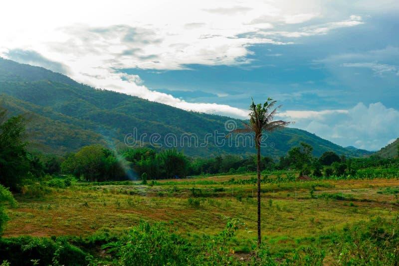 Ένα δέντρο καρύδων στη μέση του καλλιεργήσιμου εδάφους και του μπλε ουρανού στοκ εικόνα