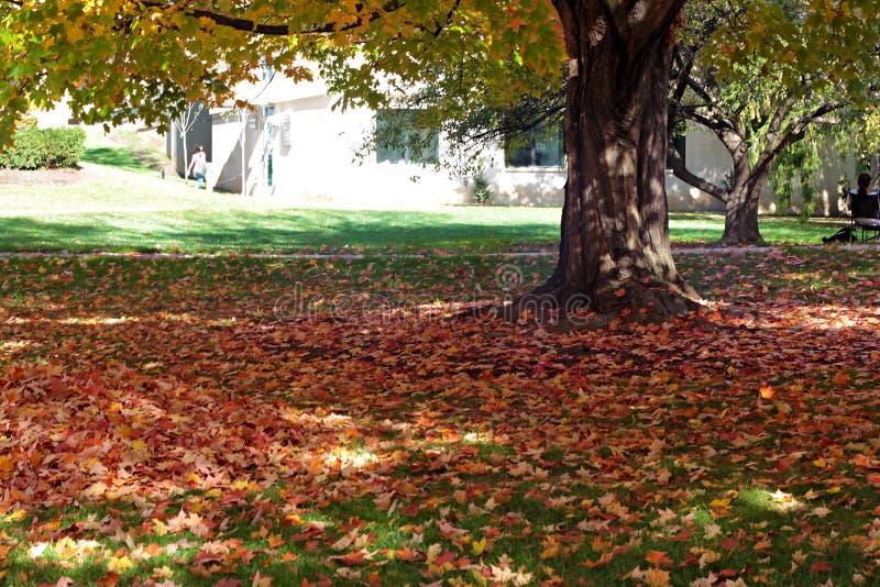Ένα δέντρο που στέκεται carper του ζωηρόχρωμου δέντρου στοκ φωτογραφία με δικαίωμα ελεύθερης χρήσης