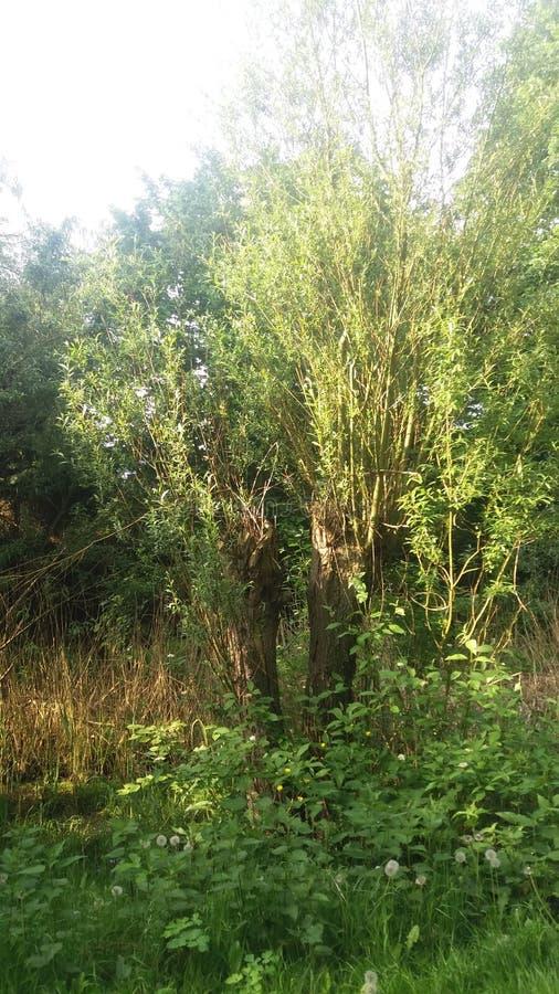 Ένα δέντρο σε ένα δάσος στοκ φωτογραφία με δικαίωμα ελεύθερης χρήσης