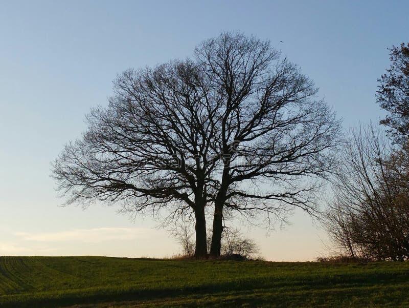ένα δέντρο της ζωής στοκ φωτογραφίες