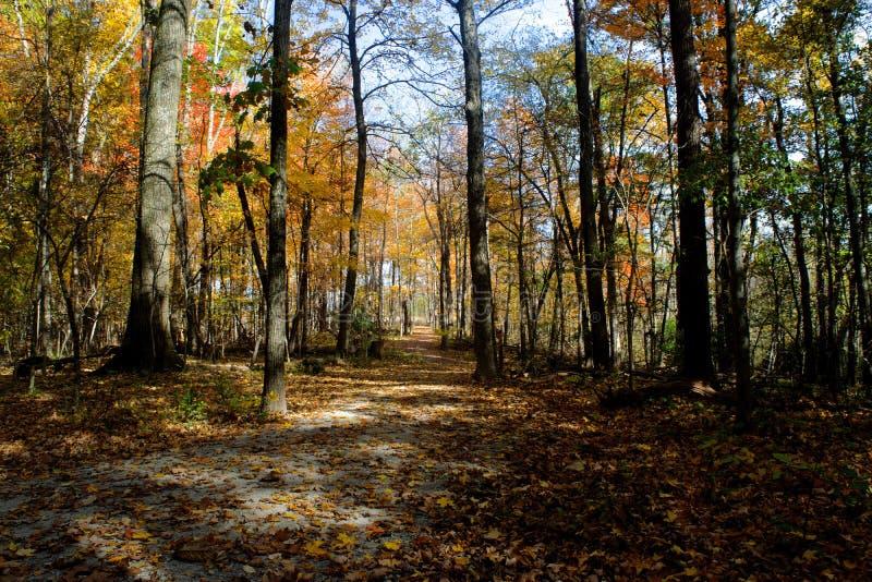 Ένα ίχνος το φθινόπωρο στο κεντρικό Οχάιο στοκ φωτογραφία με δικαίωμα ελεύθερης χρήσης