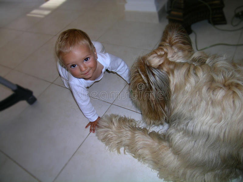 Ένα αγοράκι με τα μεγάλα μάτια και μεγάλο σκυλί στοκ φωτογραφία με δικαίωμα ελεύθερης χρήσης