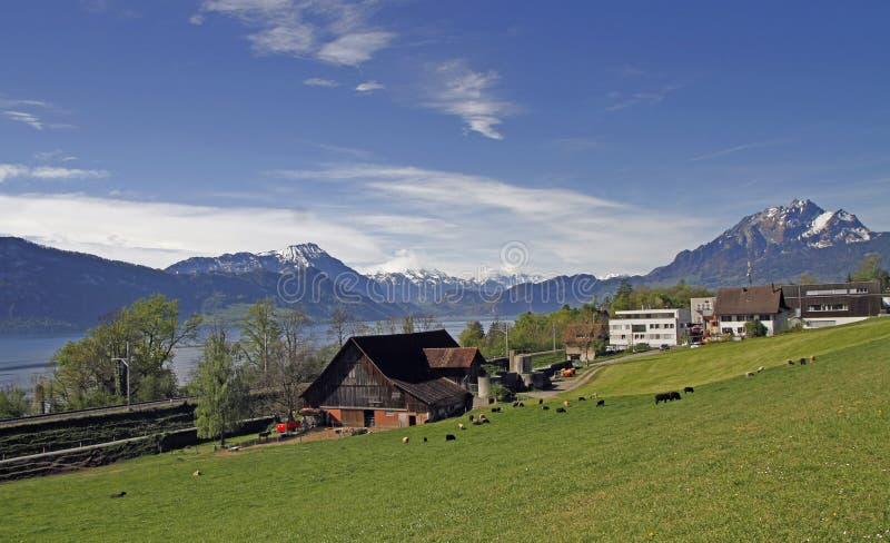 Ένα αγροτικό τοπίο που βλασταίνεται στην τράπεζα της λίμνης Λουκέρνη στοκ φωτογραφίες