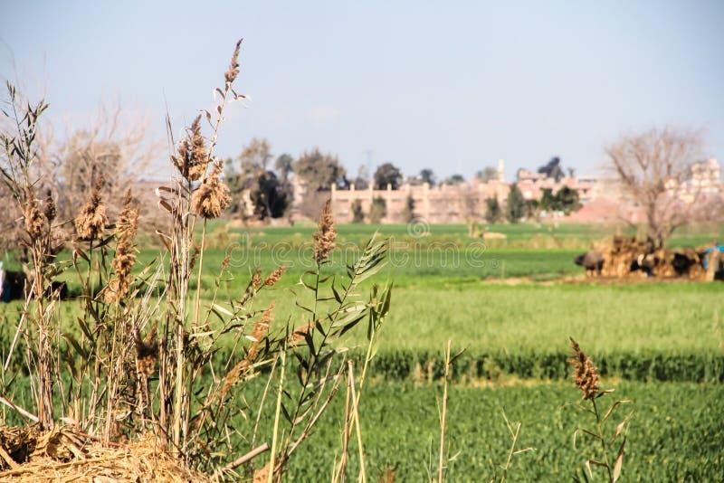 Ένα αγρόκτημα με βγάζει φύλλα στοκ εικόνες