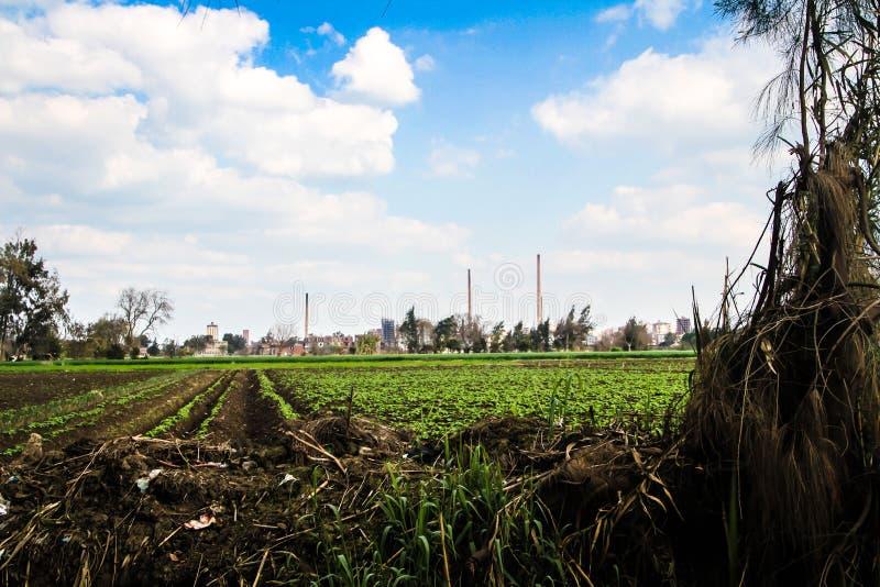 Ένα αγρόκτημα με βγάζει φύλλα στοκ φωτογραφία με δικαίωμα ελεύθερης χρήσης
