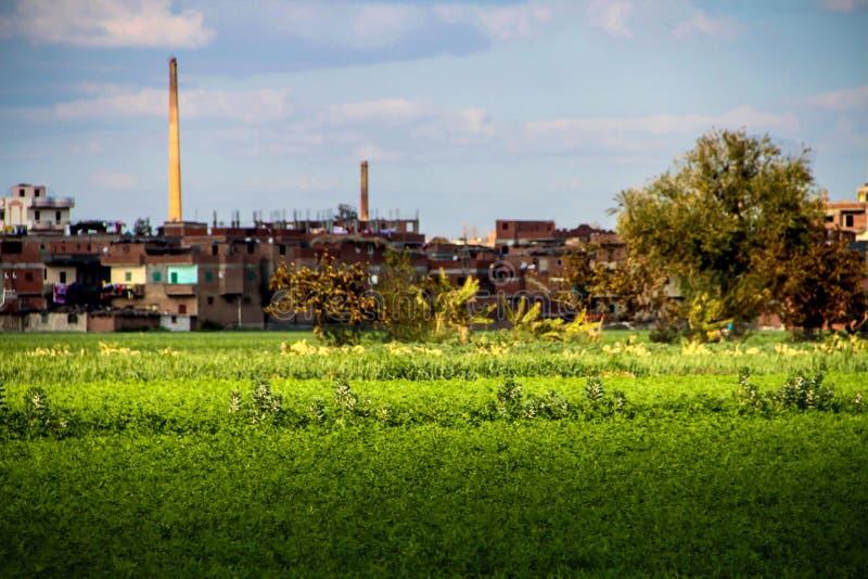 Ένα αγρόκτημα με βγάζει φύλλα στοκ φωτογραφία