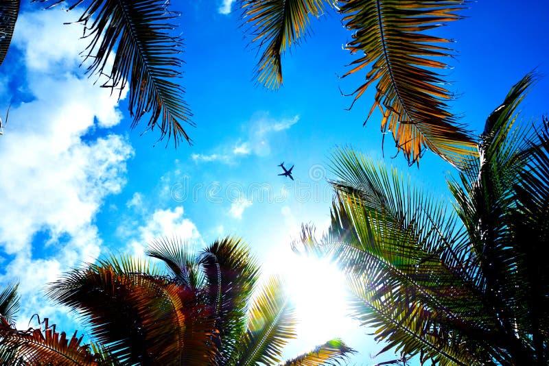 Ένα αεροπλάνο που πετά επάνω από το φοίνικα στοκ εικόνες
