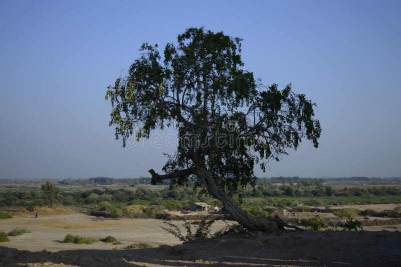 Ένα απομονωμένο δέντρο που επιζεί της αγριότητας στοκ φωτογραφία με δικαίωμα ελεύθερης χρήσης