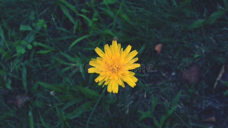 Ένα απομονωμένο λουλούδι στοκ φωτογραφία με δικαίωμα ελεύθερης χρήσης