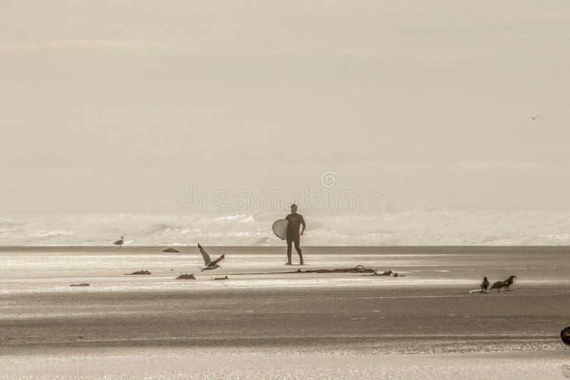 Ένα απομονωμένο surfer στο υγρό κοστούμι που επιστρέφει στην παραλία από τον ωκεανό με τη στάση πουλιών και πετώντας και ένα σχοι στοκ φωτογραφία