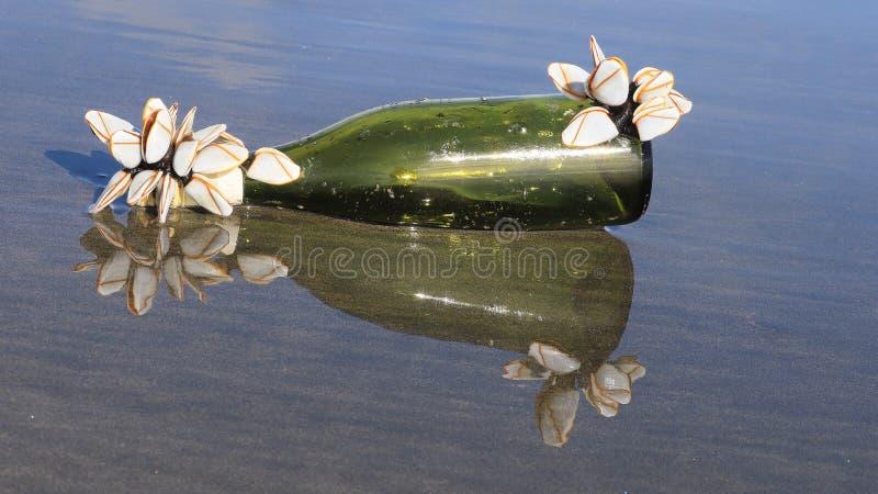 Ένα απροσδόκητο δώρο παρουσίασε τον ωκεανό, διακοσμώντας το μπουκάλι με τα ασυνήθιστα λουλούδια στοκ εικόνα