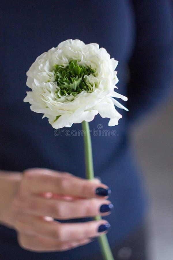 Ένα βατράχιο λουλουδιών υπό εξέταση στοκ φωτογραφία με δικαίωμα ελεύθερης χρήσης