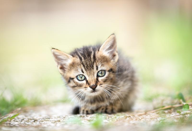 Ένα γάτα-κουτάβι κοιτάζει στοκ εικόνες με δικαίωμα ελεύθερης χρήσης