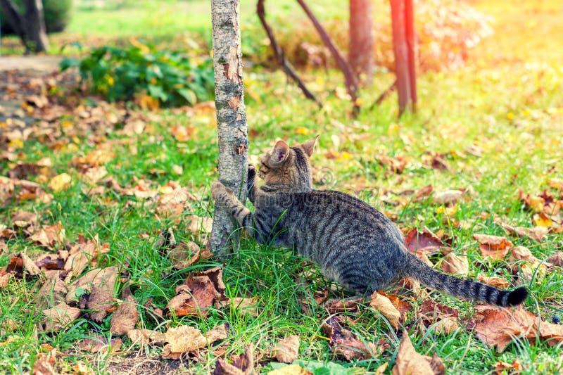 Ένα γατάκι παίζει σε έναν κήπο φθινοπώρου στοκ φωτογραφία με δικαίωμα ελεύθερης χρήσης