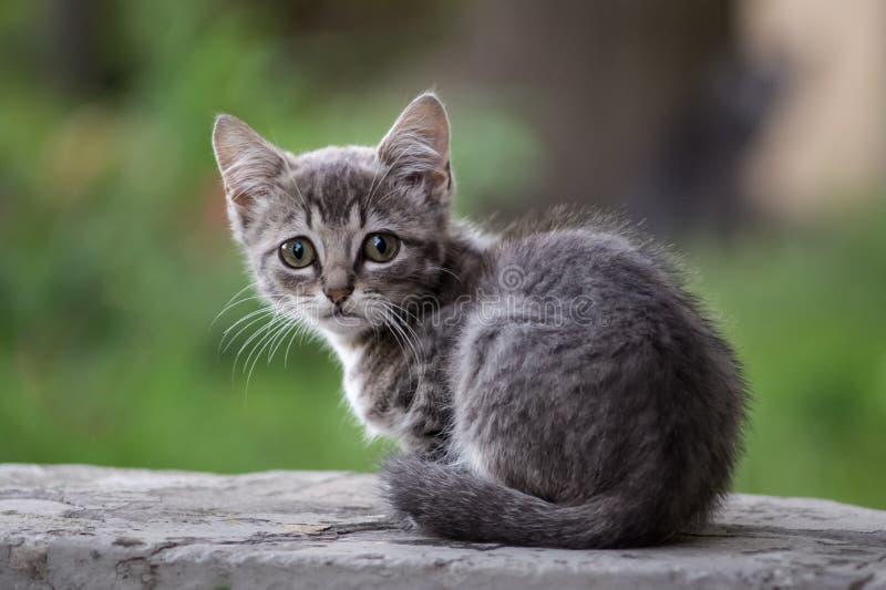 Ένα γκρίζο άστεγο γατάκι είναι λυπημένο στοκ εικόνα με δικαίωμα ελεύθερης χρήσης