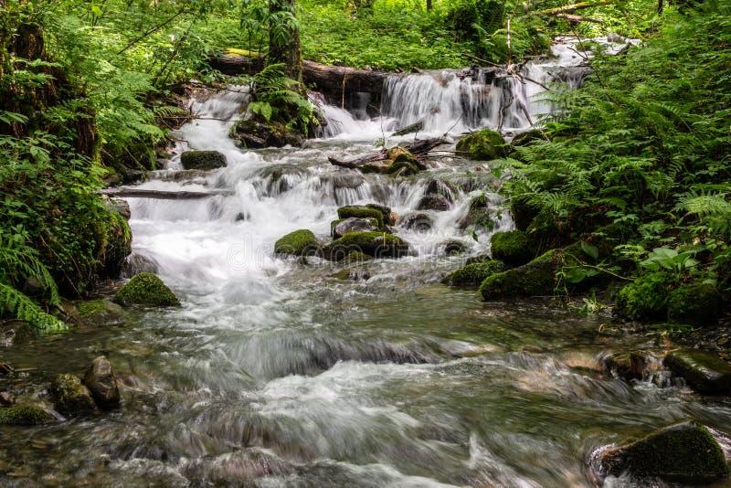 Ένα γρήγορο ρεύμα βουνών στο δάσος, που περιβάλλεται από την πρασινάδα στοκ εικόνες με δικαίωμα ελεύθερης χρήσης