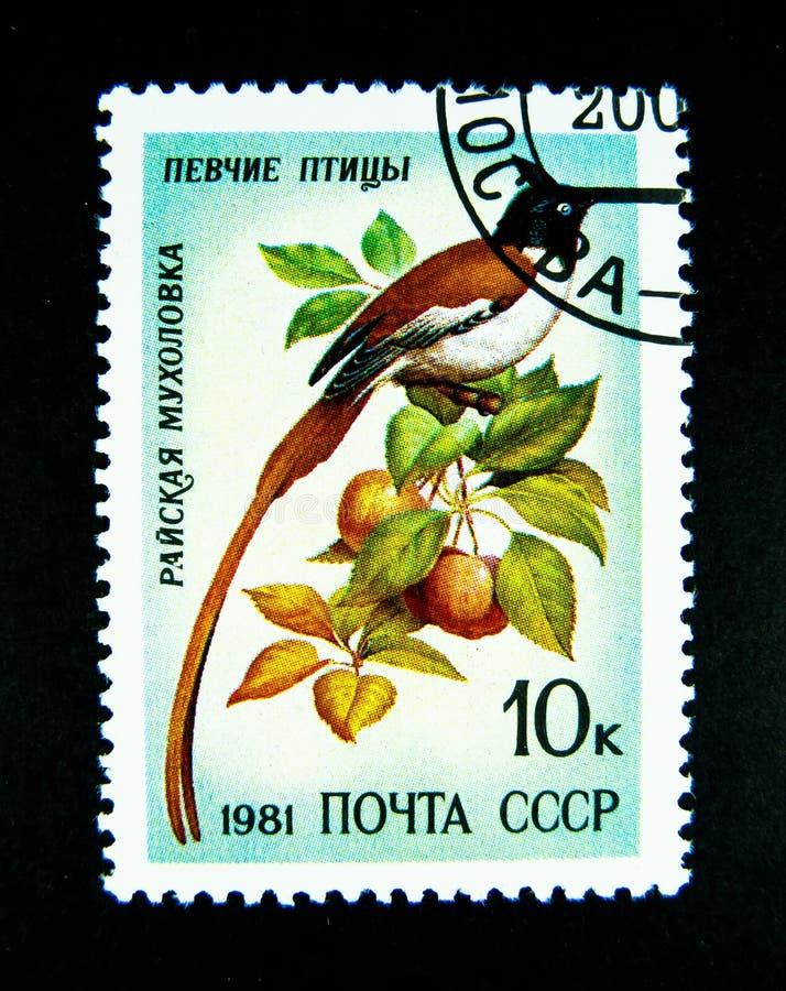 Ένα γραμματόσημο που τυπώνεται στη Ρωσία παρουσιάζει μια εικόνα του καφετιού με μακριά ουρά πουλιού στοκ φωτογραφία