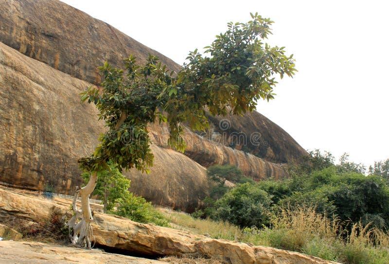 Ένα δέντρο και ένας λόφος με τον ουρανό του sittanavasal ναού σπηλιών σύνθετου στοκ εικόνες