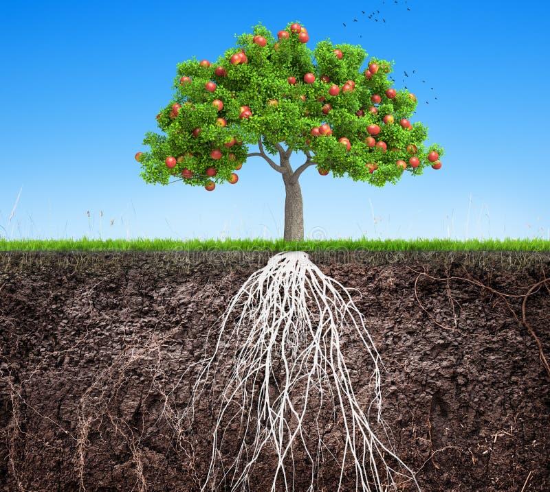 Ένα δέντρο μηλιάς και ένα χώμα με τις ρίζες και την τρισδιάστατη απεικόνιση χλόης διανυσματική απεικόνιση