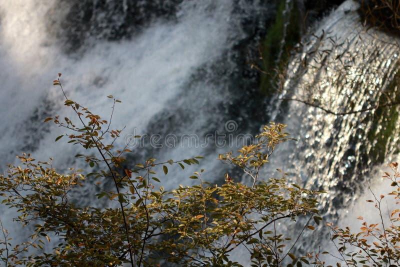 Ένα δέντρο μπροστά από τη φημισμένη πικρία πέφτει - ΟΧΑΙΟ - ΗΠΑ στοκ φωτογραφίες με δικαίωμα ελεύθερης χρήσης