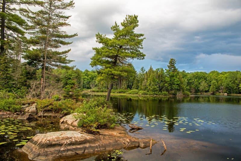 Ένα δέντρο πεύκων κλίνει έξω πέρα από τα ήρεμα νερά στοκ φωτογραφία