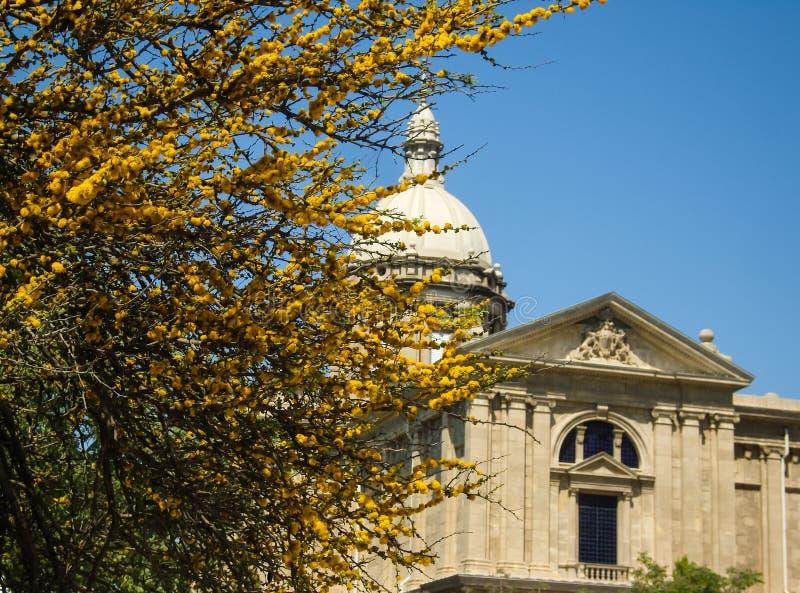 Ένα δέντρο που ανθίζει με τα κίτρινα λουλούδια σε ένα υπόβαθρο οικοδόμησης στοκ φωτογραφία με δικαίωμα ελεύθερης χρήσης