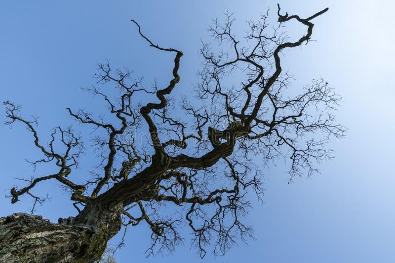 Ένα δέντρο το χειμώνα στοκ φωτογραφία με δικαίωμα ελεύθερης χρήσης