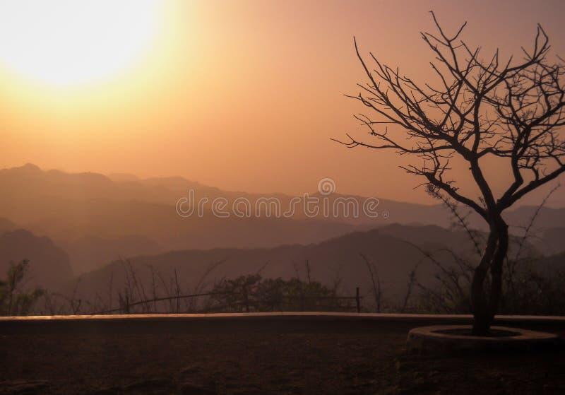 Ένα δέντρο στο ηλιοβασίλεμα χωρίς τα φύλλα αλλά μόνο τους κλάδους στοκ φωτογραφίες