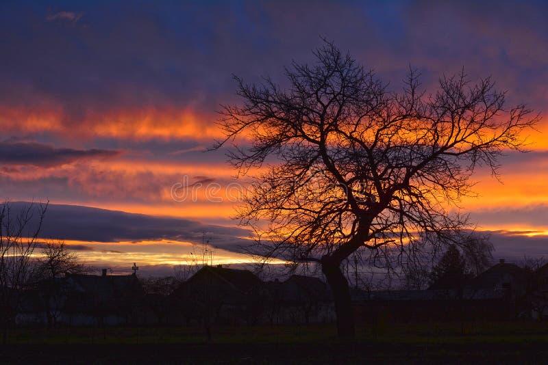 Ένα ειδυλλιακό ηλιοβασίλεμα με δέντρο - ευρύτερη γωνία στοκ εικόνα με δικαίωμα ελεύθερης χρήσης