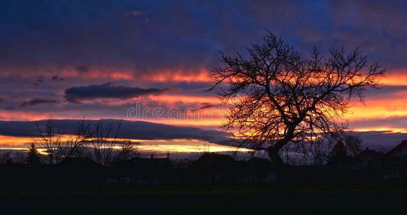 Ένα ειδυλλιακό ηλιοβασίλεμα με δέντρο - πανόραμα στοκ εικόνες με δικαίωμα ελεύθερης χρήσης