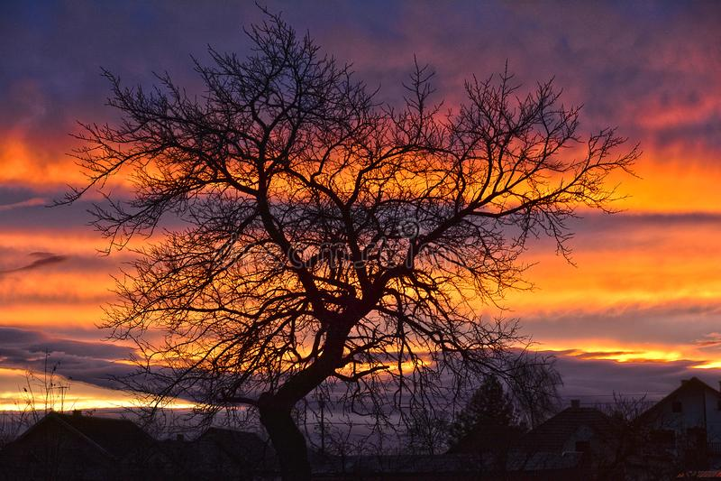 Ένα ειδυλλιακό ηλιοβασίλεμα με δέντρο στοκ φωτογραφία