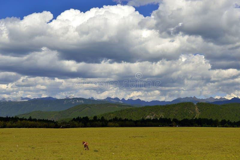 Ένα ενιαίο άλογο και μεγάλα βουνά στοκ εικόνα με δικαίωμα ελεύθερης χρήσης