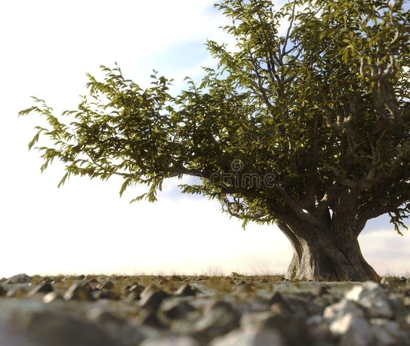 Ένα ενιαίο δέντρο έφυγε σε ένα τοπίο βράχου ερήμων στοκ φωτογραφίες με δικαίωμα ελεύθερης χρήσης