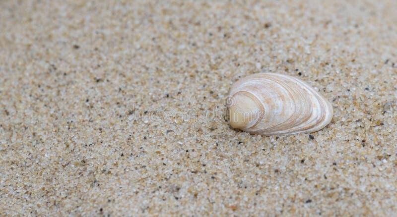 Ένα ενιαίο κοχύλι στην άμμο στοκ φωτογραφία