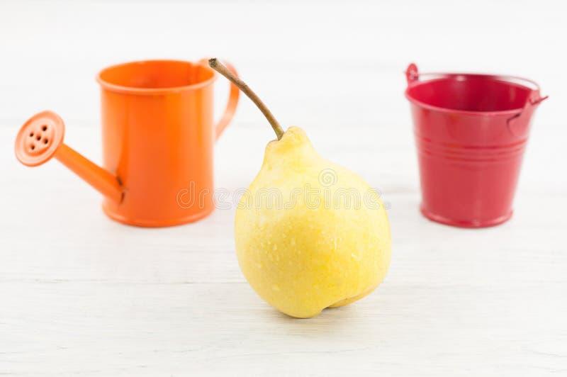 Ένα ενιαίο φρέσκο κίτρινο ώριμο ολόκληρο αχλάδι και το κενό κόκκινων πότισμα κάδων μετάλλων πορτοκαλιού και μπορούν στοκ φωτογραφία με δικαίωμα ελεύθερης χρήσης