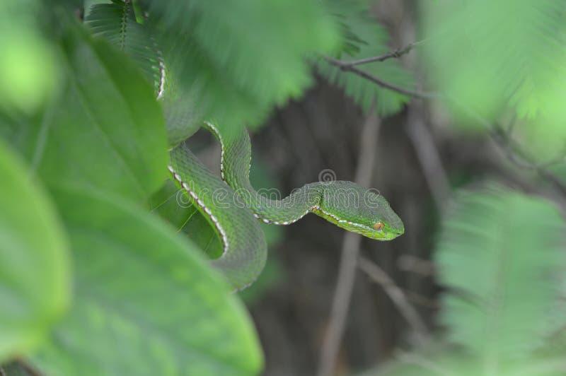 Ένα επικίνδυνο φίδι στοκ εικόνες
