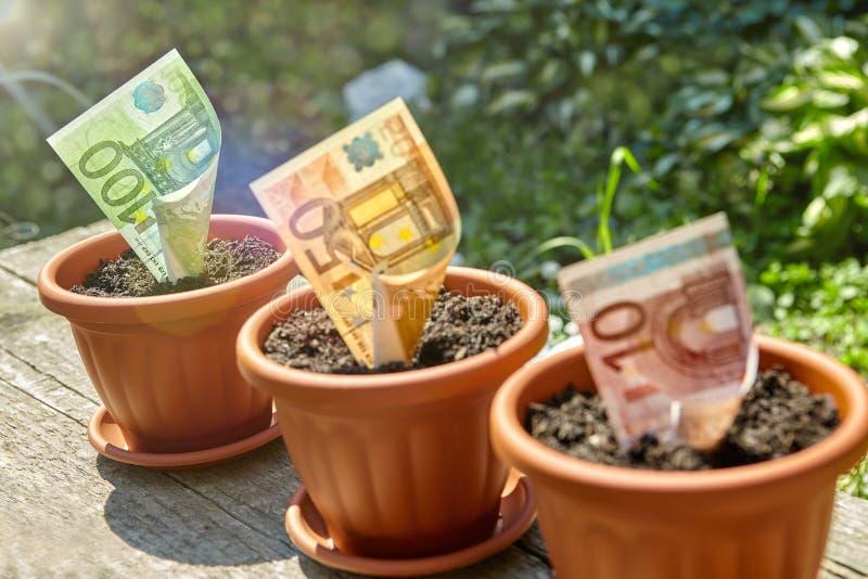 Ένα ευρο- τραπεζογραμμάτιο flowerpot στοκ εικόνα με δικαίωμα ελεύθερης χρήσης