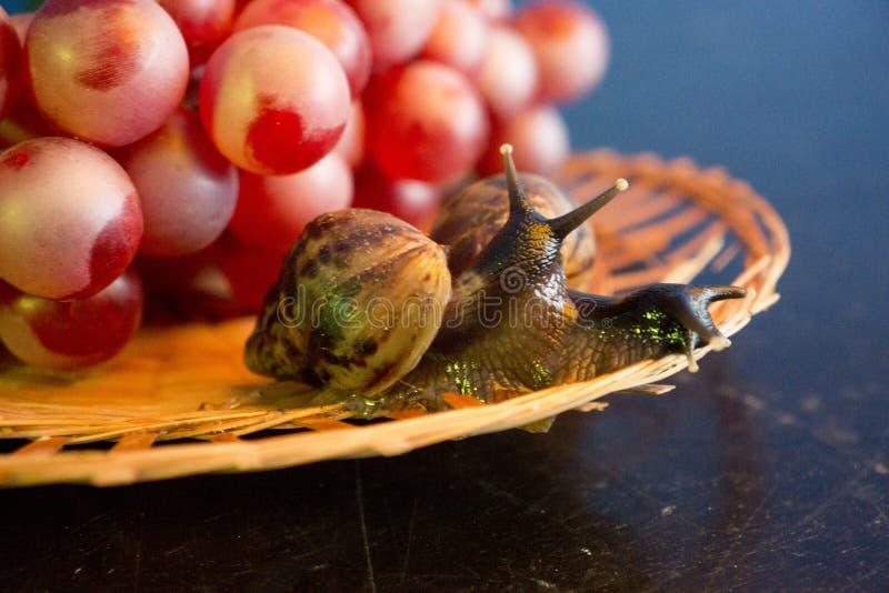 Ένα ζευγάρι των σαλιγκαριών σε ένα ψάθινο πιάτο με τα κόκκινα σταφύλια στοκ φωτογραφία με δικαίωμα ελεύθερης χρήσης