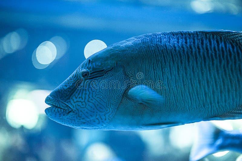 Ένα θαλάσσιο ψάρι στο ενυδρείο στοκ εικόνες