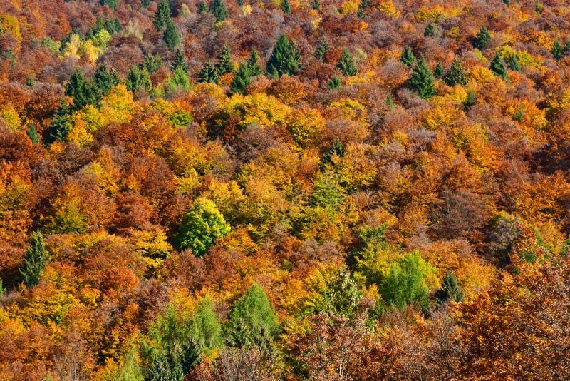 ένα θεαματικό φθινόπωρο χρωματίζει τα δέντρα στο δάσος στοκ εικόνες