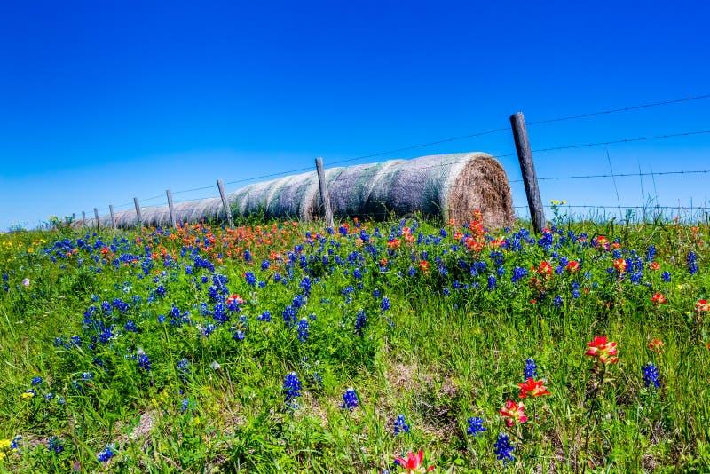 Ένα λιβάδι με τα στρογγυλά δέματα και το φρέσκο Τέξας Wildflowers σανού στοκ εικόνες
