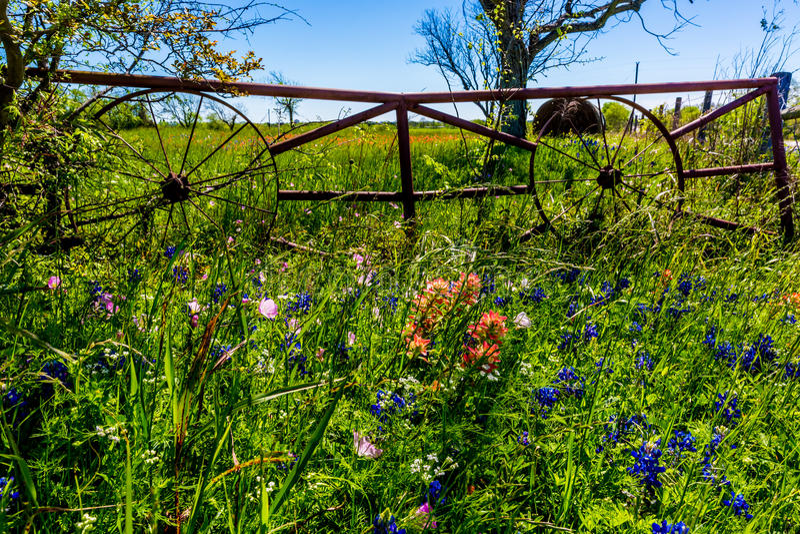 Ένα λιβάδι με τα στρογγυλά δέματα και το φρέσκο Τέξας Wildflowers σανού στοκ εικόνα με δικαίωμα ελεύθερης χρήσης