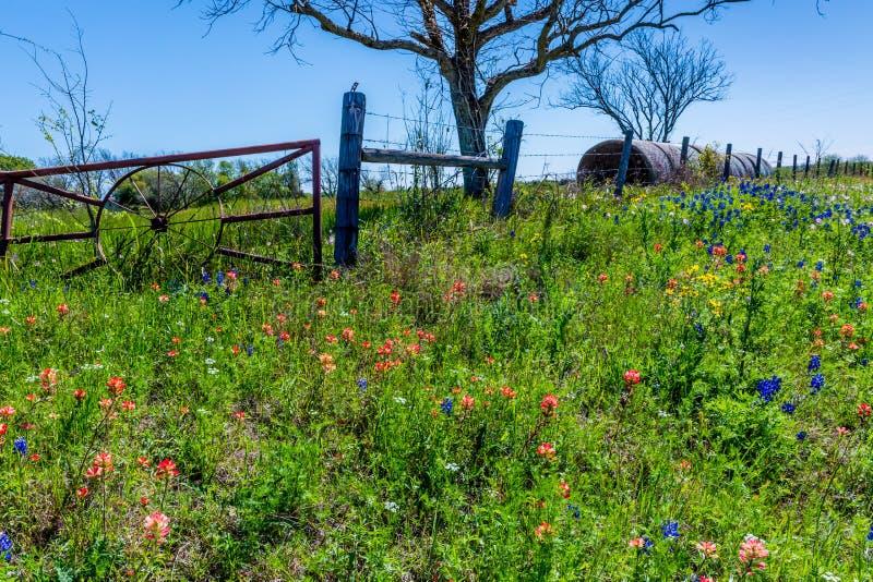 Ένα λιβάδι με τα στρογγυλά δέματα και το φρέσκο Τέξας Wildflowers σανού στοκ φωτογραφία