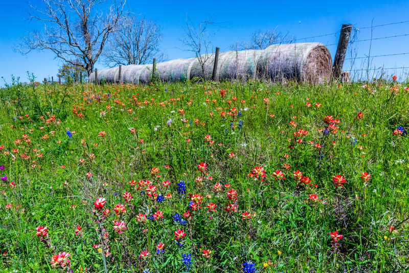 Ένα λιβάδι με τα στρογγυλά δέματα και το φρέσκο Τέξας Wildflowers σανού στοκ φωτογραφία με δικαίωμα ελεύθερης χρήσης