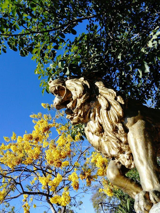 Ένα λιοντάρι στο πάρκο στοκ φωτογραφία με δικαίωμα ελεύθερης χρήσης
