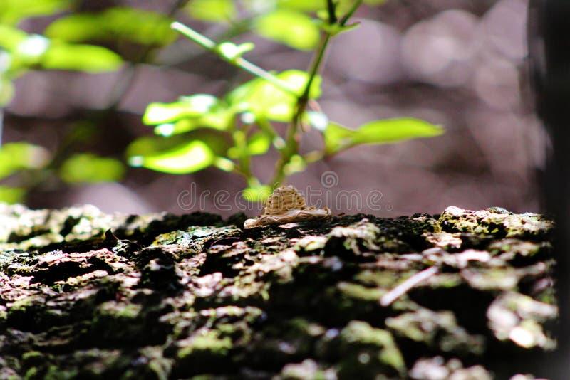 Ένα καπέλο και ένα δέντρο στοκ φωτογραφίες με δικαίωμα ελεύθερης χρήσης